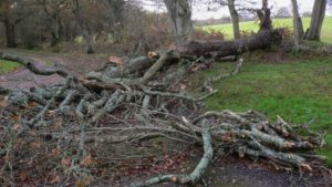 Tree_down_by_driveway_-_geograph.org.uk_-_1583670